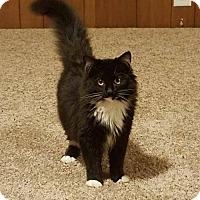 Adopt A Pet :: Tootles - Princeton, MN