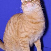 Adopt A Pet :: Sunny - Winston-Salem, NC