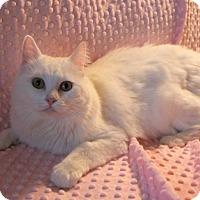 Adopt A Pet :: CHRISTIE - Newport Beach, CA