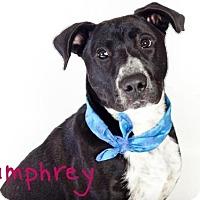 Adopt A Pet :: HUMPHREY - Sacramento, CA