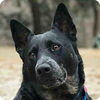 Adopt A Pet :: SIRIUS - Pittsburgh, PA