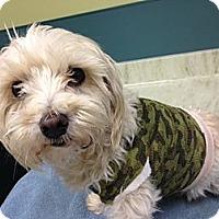 Adopt A Pet :: Buddy - Orange, CA