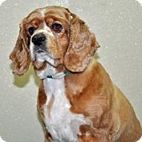 Adopt A Pet :: Ella - Port Washington, NY