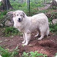 Adopt A Pet :: Smooch - Ascutney, VT