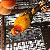 Adopt A Pet :: Matilda - Punta Gorda, FL