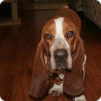 Adopt A Pet :: Ingram - Northport, AL