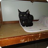 Adopt A Pet :: Maurice - Medina, OH