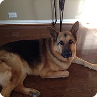 Adopt A Pet :: Diesel - Fort Worth, TX