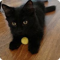 Adopt A Pet :: Hoss - Florence, KY