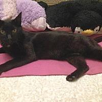 Adopt A Pet :: Aiyana - Seattle, WA