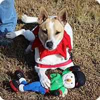 Adopt A Pet :: Jake - Pinehurst, NC