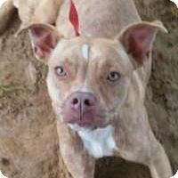 Adopt A Pet :: Maggie - Darien, GA