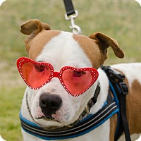 Adopt A Pet :: Harvey - Greenwood, SC