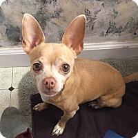 Adopt A Pet :: Bart - San Francisco, CA