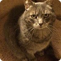 Adopt A Pet :: Brooklynne - Bloomsburg, PA