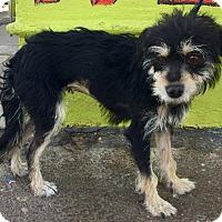 Adopt A Pet :: Banana - Phoenix, AZ