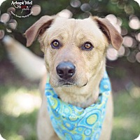 Adopt A Pet :: Keno - Kingwood, TX