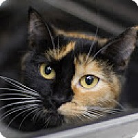 Adopt A Pet :: Aurora - Bradenton, FL