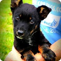 Adopt A Pet :: Cracker Jack~ meet me! - Glastonbury, CT