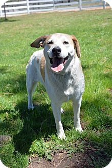 Labrador Retriever Mix Dog for adoption in Mountain Center, California - Ginger