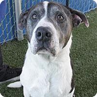 Adopt A Pet :: Cherry - Hawthorne, CA