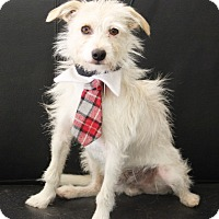 Adopt A Pet :: Sonny - Dalton, GA
