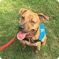 Adopt A Pet :: Sisco - Orlando, FL