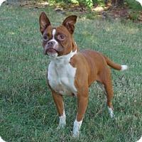 Adopt A Pet :: Sonea (D16-139) - Lebanon, TN