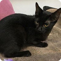 Adopt A Pet :: Callum - Elyria, OH