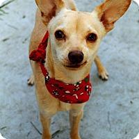 Adopt A Pet :: Douglas - Dublin, CA