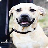 Adopt A Pet :: ZIMBA - Peoria, IL
