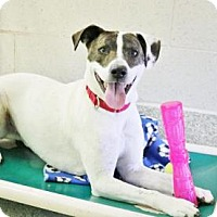 Adopt A Pet :: Roscoe - Ann Arbor, MI