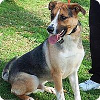Adopt A Pet :: Coda - PENDING - kennebunkport, ME