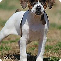 Adopt A Pet :: Emma Jean - Wytheville, VA