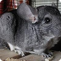 Adopt A Pet :: Samwell - Titusville, FL