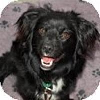 Adopt A Pet :: Lorenzo - Mission Viejo, CA