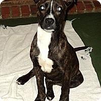 Adopt A Pet :: Bridgette - Tallahassee, FL