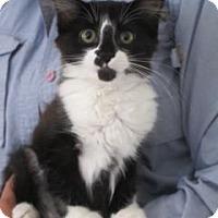 Adopt A Pet :: Christie AKA Fritz - Davis, CA