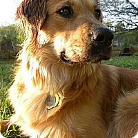 Adopt A Pet :: Ellie - Foster, RI