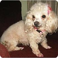 Adopt A Pet :: Suzette - Mooy, AL