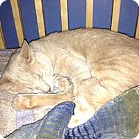 Adopt A Pet :: Cooper - Lyndora, PA