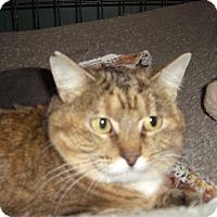 Adopt A Pet :: Calsilica - Alden, IA