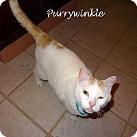Adopt A Pet :: Purrywinkle - Bentonville, AR