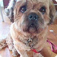 Adopt A Pet :: Elmer - Davison, MI