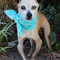 Adopt A Pet :: Dewey - Rancho Palos Verdes, CA