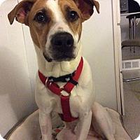 Adopt A Pet :: Asher - Grand Rapids, MI