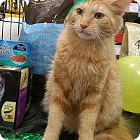 Adopt A Pet :: Maxsim - Harrisburg, NC