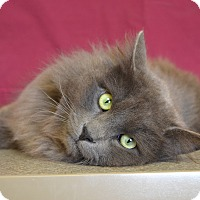 Adopt A Pet :: Griffin - Larned, KS