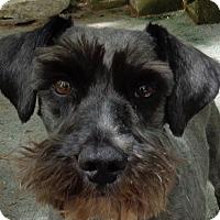 Adopt A Pet :: Robbie - Crump, TN