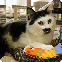Adopt A Pet :: Charlie - Roseville, CA